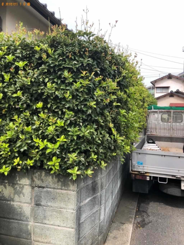 庭木剪定サービス施工前