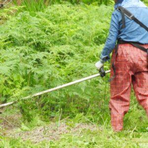 名古屋市で草刈りにかかる料金相場は?追加料金や業者選びのコツまで解説