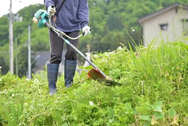 豊橋市で草刈りに最適な年3回の時期~楽に草刈りを終えるコツまで徹底解説